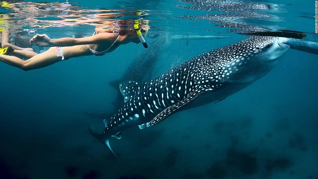 oslob-whale-shark
