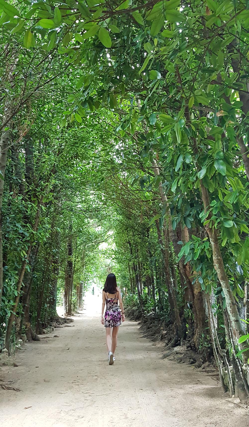 Bise Fukugi Tree Road