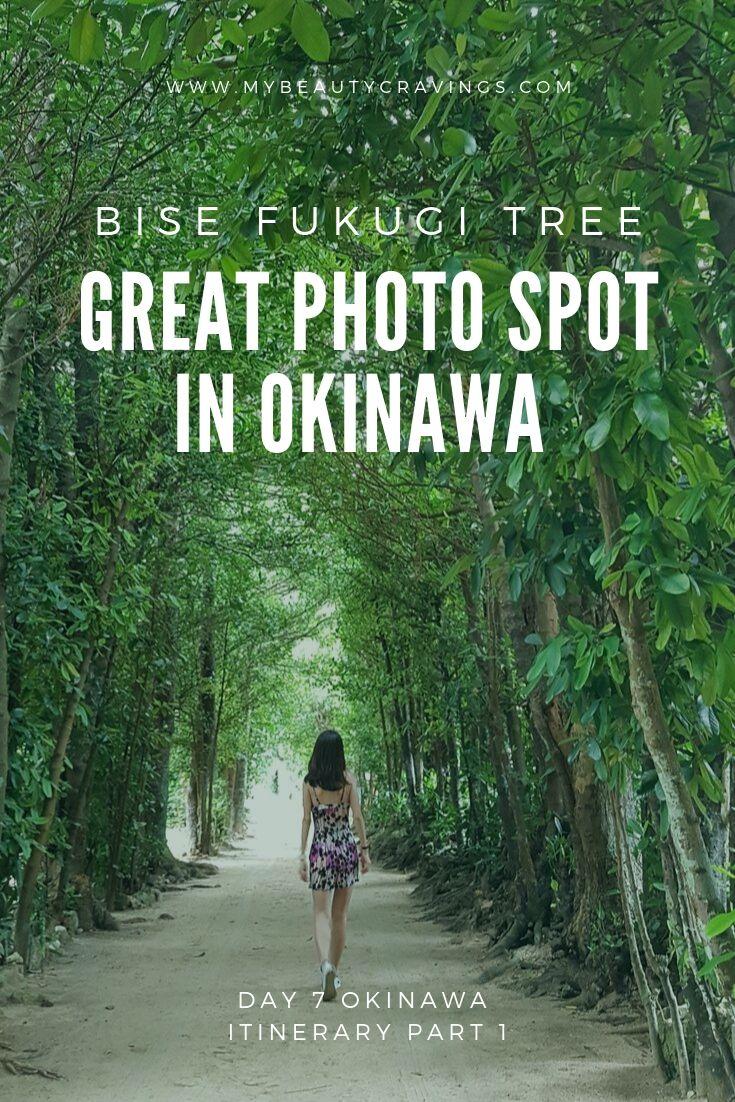 Bise Fukugi Tree Road Okinawa