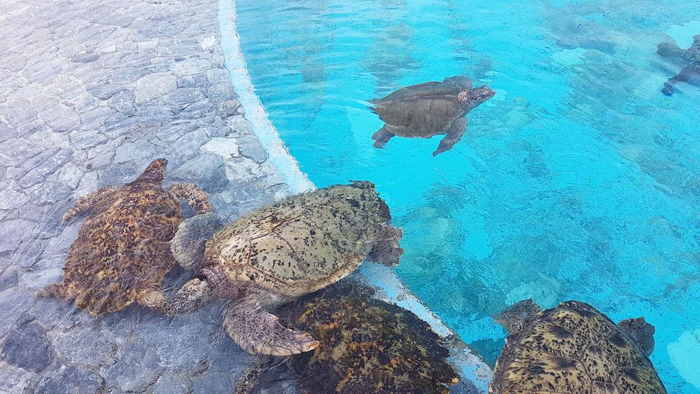 Okinawa Sea Turtle Pool