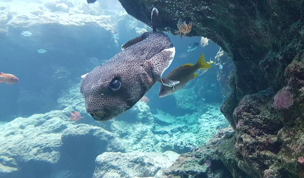 Okinawa Chuarumi Aquarium