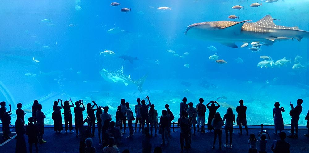 Okinawa Aquarium Whale Shark