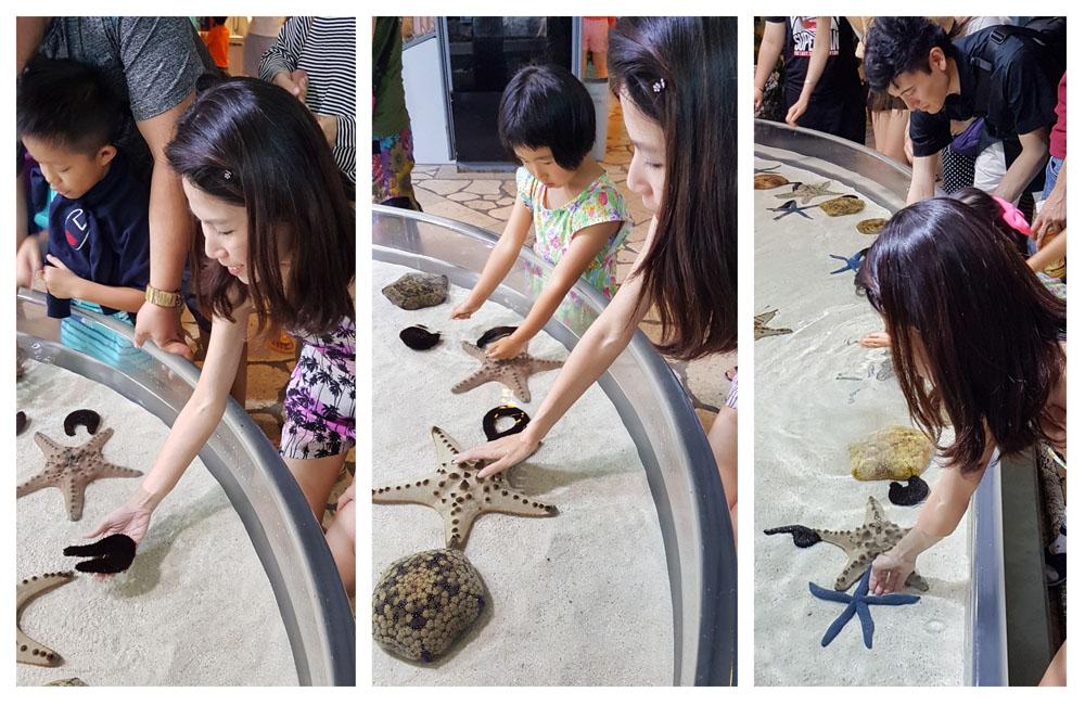 Okinawa Aquarium Starfish