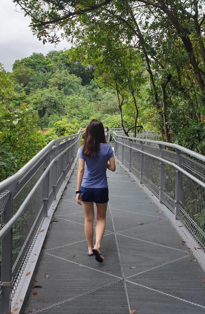 Southern Ridges Forest Walk